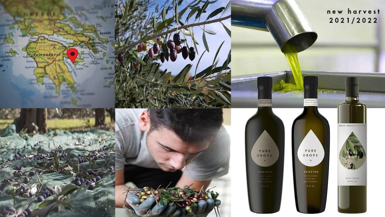 The new olive oil harvest 2021/2022 begins